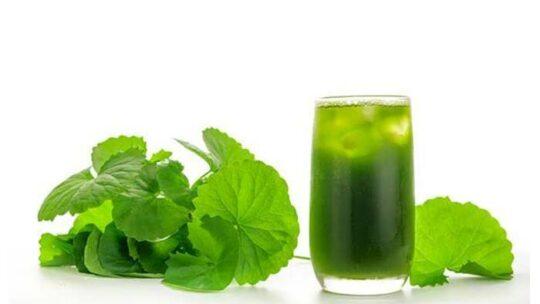 Rau má có tác dụng gì đối với sức khỏe – Lưu ý khi ăn loại rau này